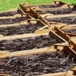 Séchage d'une récolte de Vanille Bourbon